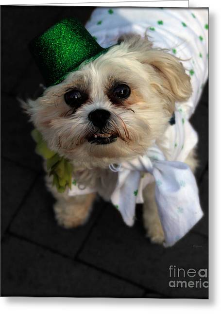 Dogs In Art Greeting Cards - Saint Patricks Day  Greeting Card by Steven  Digman