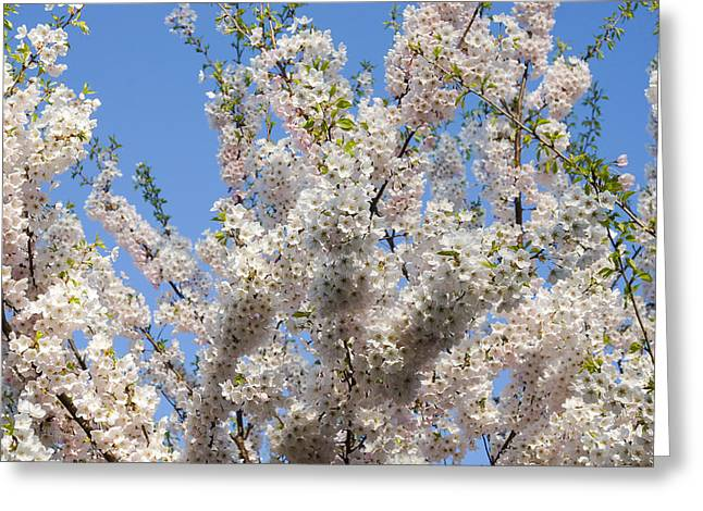 March Greeting Cards - Sakura Cherry - Chaotic Spring Abundance Greeting Card by Georgia Mizuleva