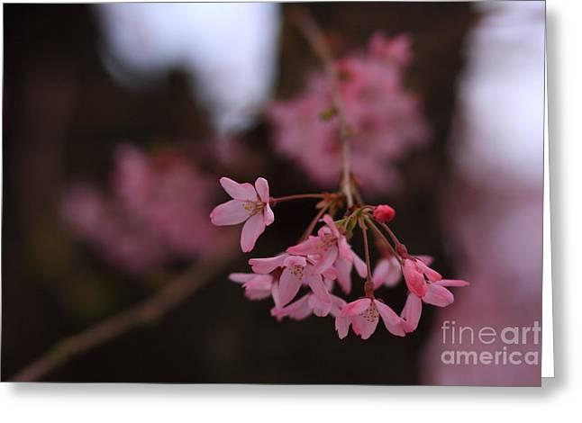 Bloosom Greeting Cards - Sakura Greeting Card by Junko T Russell