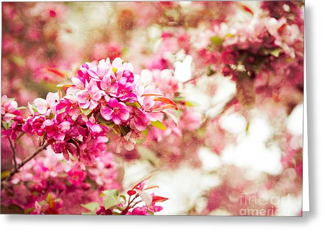 Dallas Arboretum Greeting Cards - Sakura Spring Tree Greeting Card by Sonja Quintero
