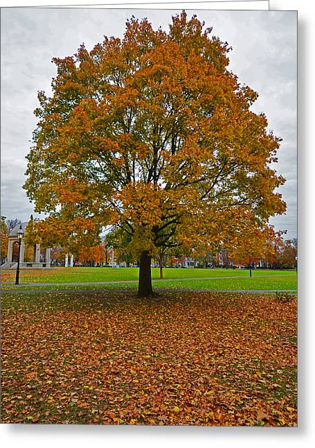 Oxford. Oxford Ma. Massachusetts Greeting Cards - Salem Commons Foliage Greeting Card by Toby McGuire