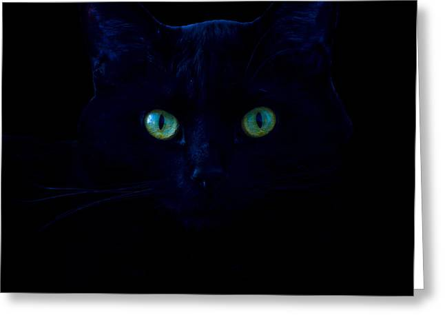 Forboding Greeting Cards - Salem the Cat Greeting Card by Robert Estes