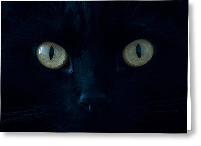 Forboding Greeting Cards - Salem the Cat up Close Greeting Card by Robert Estes