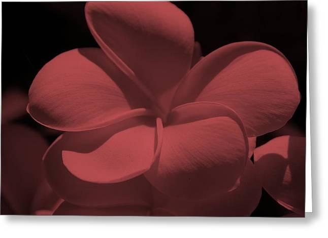 Fish Digital Art Greeting Cards - Salmon Bloom Greeting Card by Rob Hans