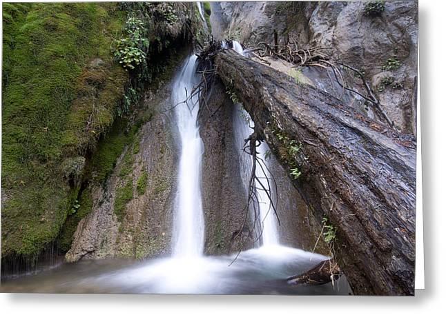 Big Sur Greeting Cards - Salmon Creek Falls Tree Limb Greeting Card by Lee Bertrand