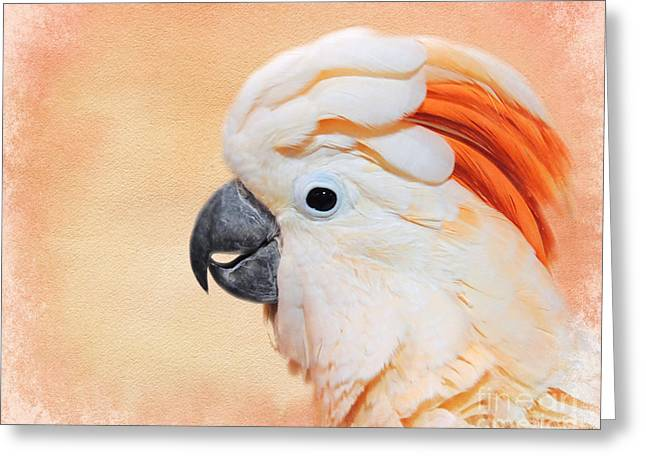 Salmon Crested Cockatoo Portrait Greeting Card by Jai Johnson