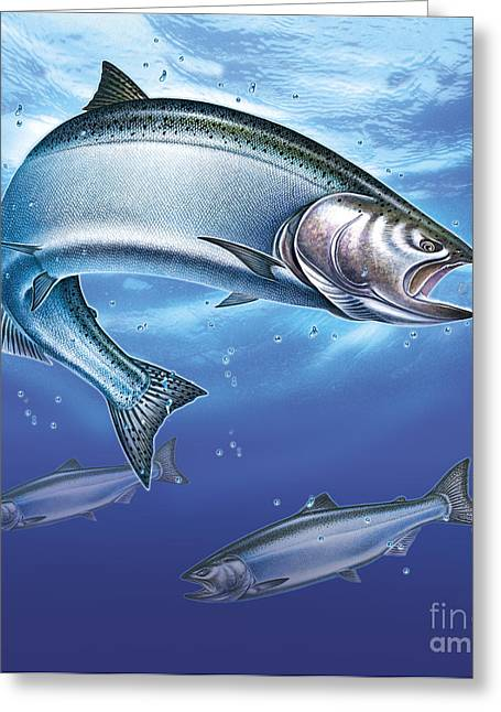 Coho Paintings Greeting Cards - Salmon  Greeting Card by Jon Q Wrioght