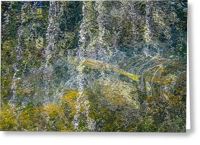 Trees Reflecting In Creek Greeting Cards - Salmon Run Beneath The Forest Reflection Greeting Card by Roxy Hurtubise