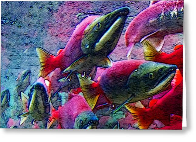 Chinook Salmon Greeting Cards - Salmon Run - Square - 2013-0103 Greeting Card by Wingsdomain Art and Photography