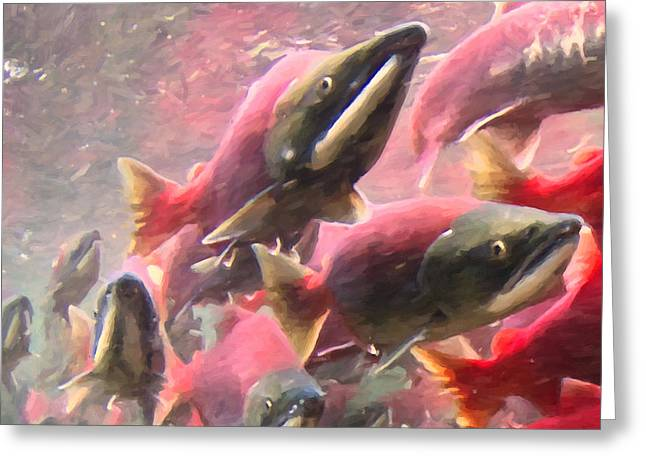 Chinook Salmon Greeting Cards - Salmon Run - Square - Painterly - 2013-0103 Greeting Card by Wingsdomain Art and Photography