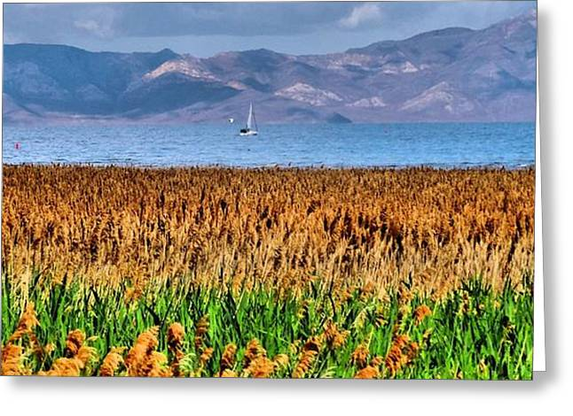 Yellow Sailboats Greeting Cards - Salt Lake Sailing Greeting Card by Dan Sproul