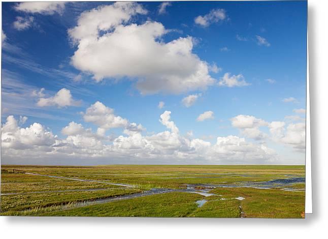 Salt Marsh Greeting Cards - Salt Meadow At Westerhever, Eiderstedt Greeting Card by Panoramic Images