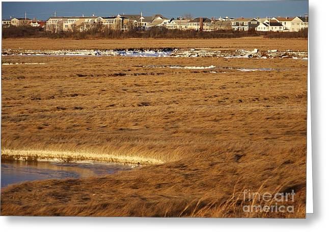 Salt Marsh. New England Greeting Cards - Salt Water Freezes Trust Me Greeting Card by Eunice Miller