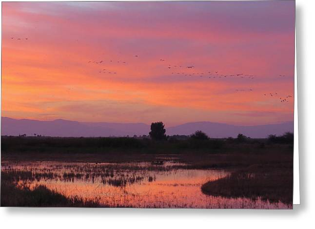 Sonny Bono Greeting Cards - Salton Sea Ponds in Pinks Greeting Card by Renee Owens
