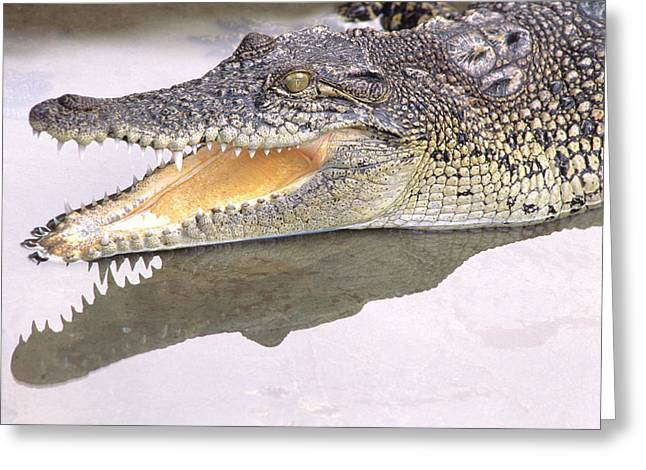 Saltwater Crocodile, Also Known Greeting Card by Thomas Wiewandt