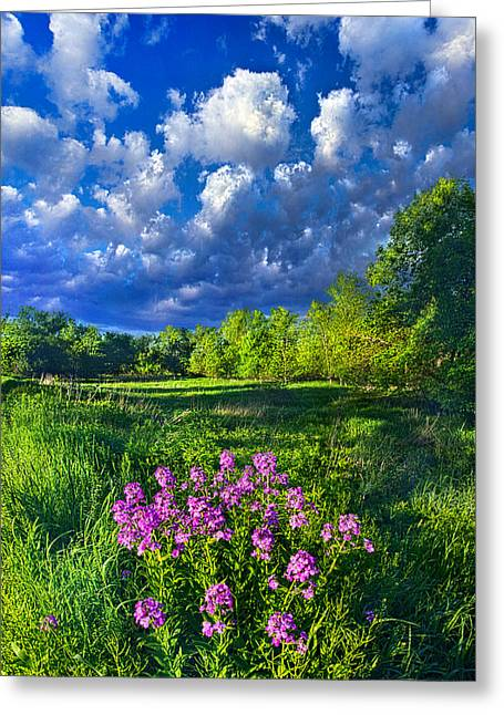 Yellow Wild Flowers Greeting Cards - Same Old Light is Shining Greeting Card by Phil Koch