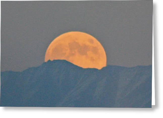 Moonrise Greeting Cards - Samhain Rising Greeting Card by C E Dyer