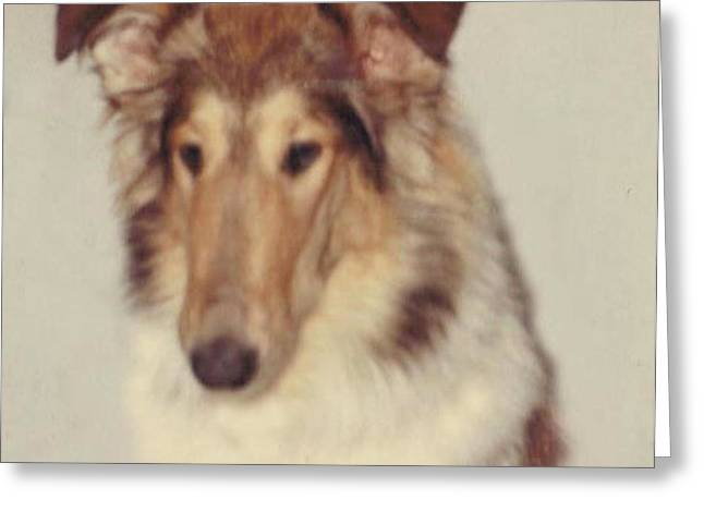 Pat Mchale Greeting Cards - Sammy the collie Greeting Card by Pat Mchale