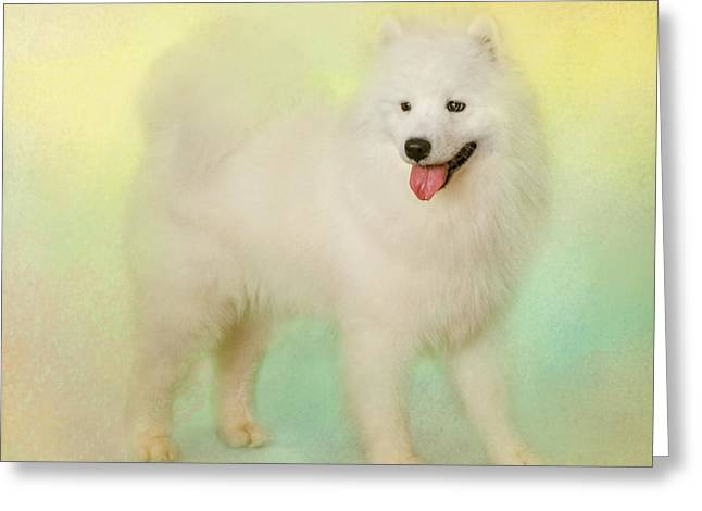 Artistic Photography Greeting Cards - Samoyed In Spring Greeting Card by Jai Johnson