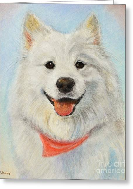 Hiking Pastels Greeting Cards - Samoyed Painting Greeting Card by Kate Sumners