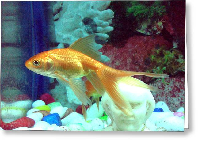 Metal Fish Art Photography Greeting Cards - Samuel Hahnemann and Gold Fish Greeting Card by Artist Nandika  Dutt