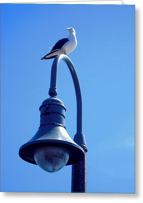 San Clemente Sea Gull  Greeting Card by Don Struke