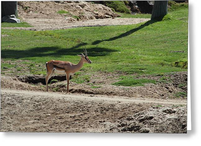 Ca Greeting Cards - San Diego Zoo - 1212144 Greeting Card by DC Photographer