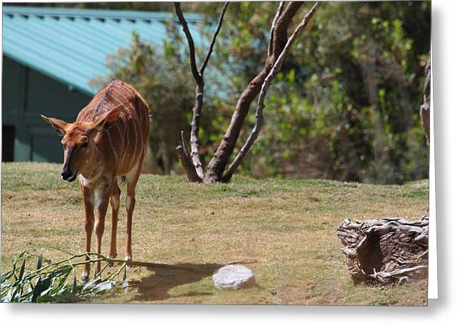 Diego Greeting Cards - San Diego Zoo - 1212146 Greeting Card by DC Photographer