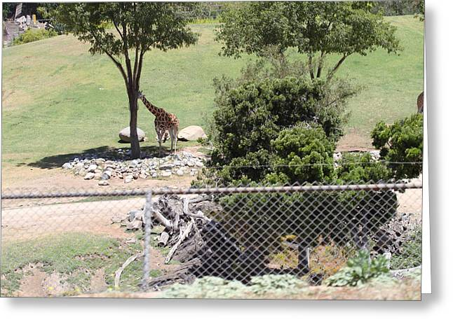 Safari Greeting Cards - San Diego Zoo - 1212282 Greeting Card by DC Photographer