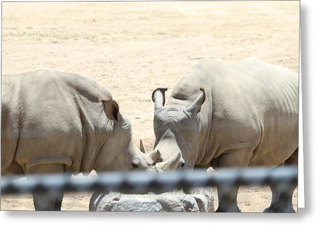 San Diego Zoo - 1212289 Greeting Card by DC Photographer