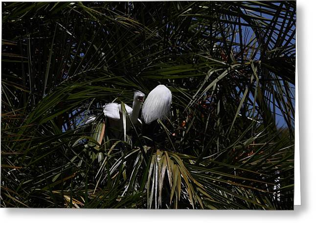 San Greeting Cards - San Diego Zoo - 1212312 Greeting Card by DC Photographer