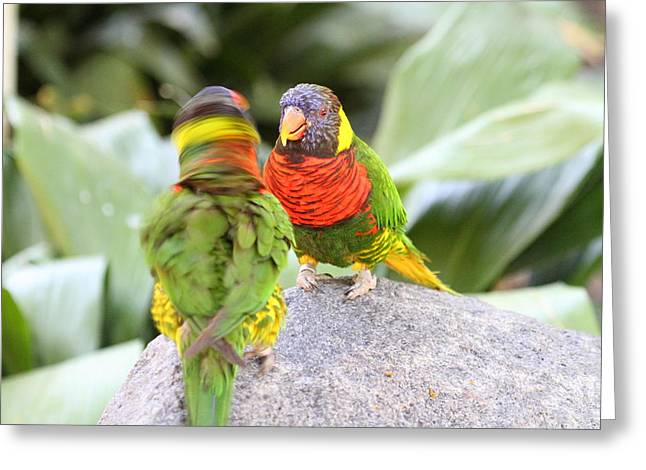 San Greeting Cards - San Diego Zoo - 1212341 Greeting Card by DC Photographer