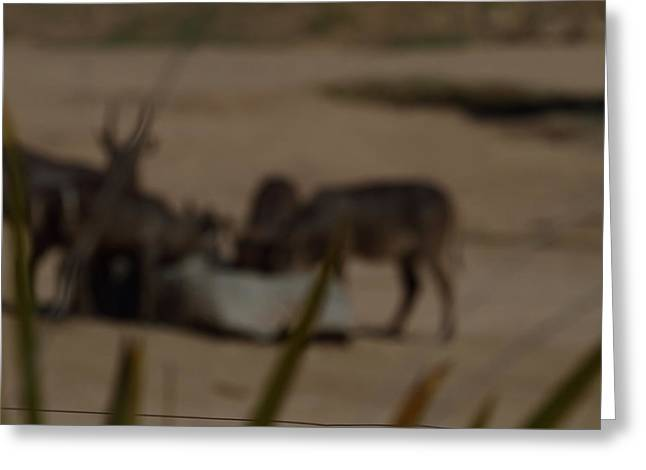 Safari Greeting Cards - San Diego Zoo - 121250 Greeting Card by DC Photographer