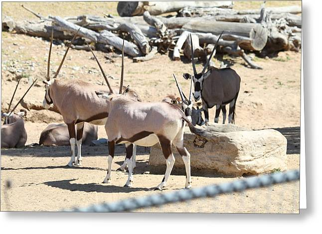 Ca Greeting Cards - San Diego Zoo - 121272 Greeting Card by DC Photographer