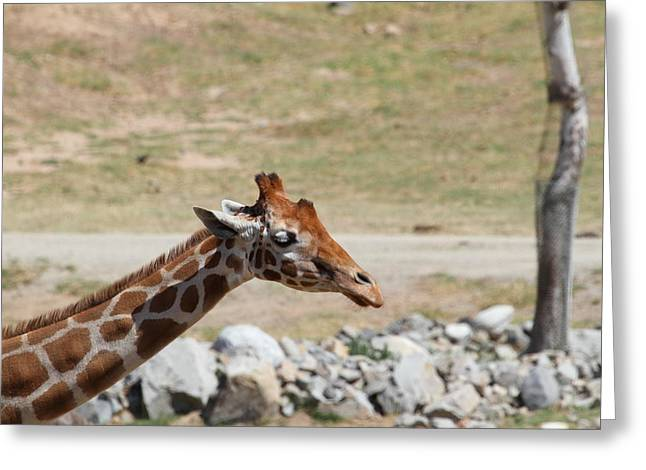 San Greeting Cards - San Diego Zoo - 121287 Greeting Card by DC Photographer