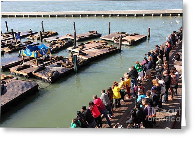San Francisco Pier 39 Sea Lions 5d26108 Greeting Card by Wingsdomain Art and Photography