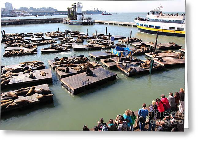 San Francisco Pier 39 Sea Lions 5d26116 Greeting Card by Wingsdomain Art and Photography