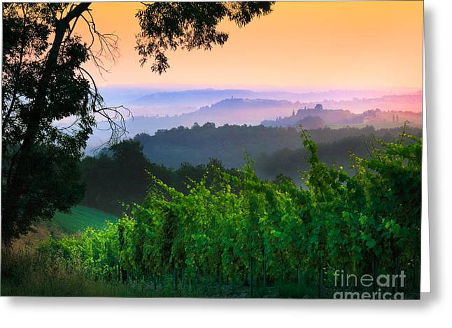 Vineyard Landscape Greeting Cards - San Gimignano Hills Greeting Card by Inge Johnsson