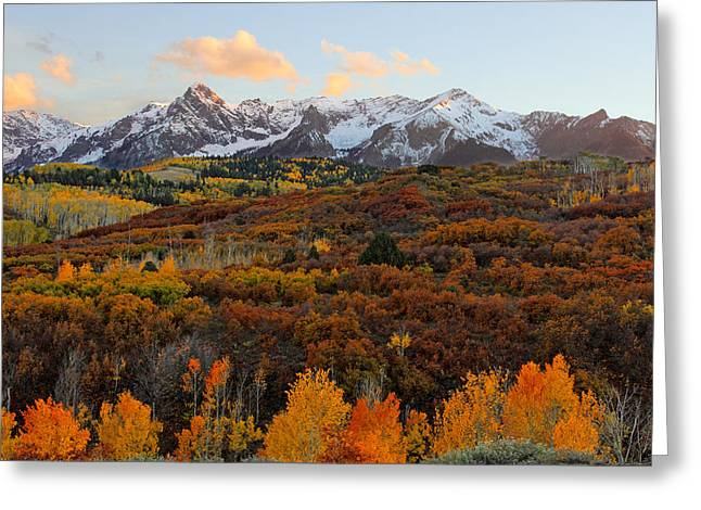 Colorful Trees Pyrography Greeting Cards - Colorado San Juan Mountains Fall 2014 Greeting Card by Brett Pfister