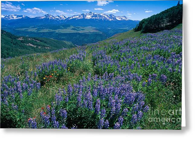 Mount Wilson Greeting Cards - San Juan National Forest, Colorado Greeting Card by George Ranalli