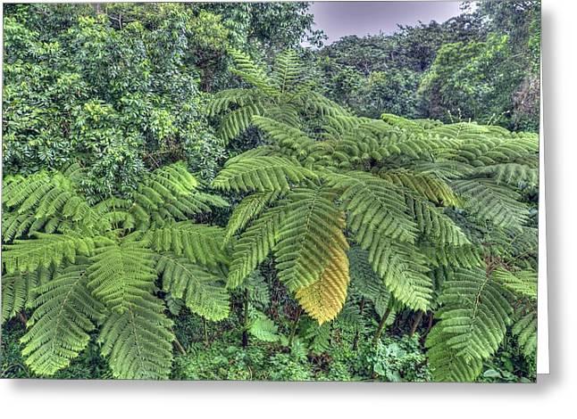 San Juan Bautista Greeting Cards - San Juan Peurto Rico Rainforest Greeting Card by Willie Harper