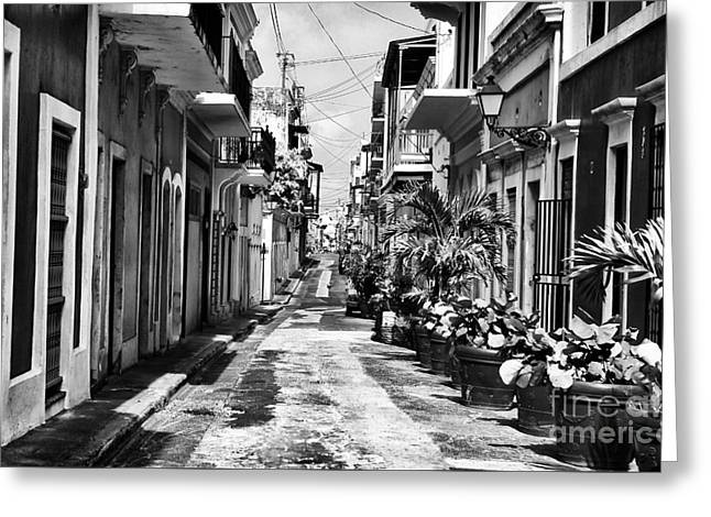 San Juan Puerto Rico Greeting Cards - San Juan Street Plants Greeting Card by John Rizzuto