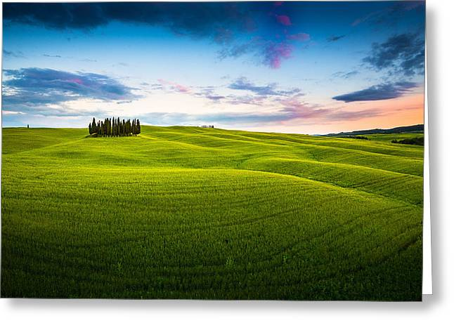 Italian Landscapes Greeting Cards - San Quirico Cypresses Greeting Card by Stefano Termanini