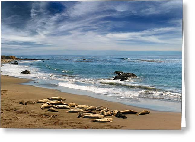 Elephant Seals Greeting Cards - San Simeon Elephant Seals Greeting Card by Wernher Krutein