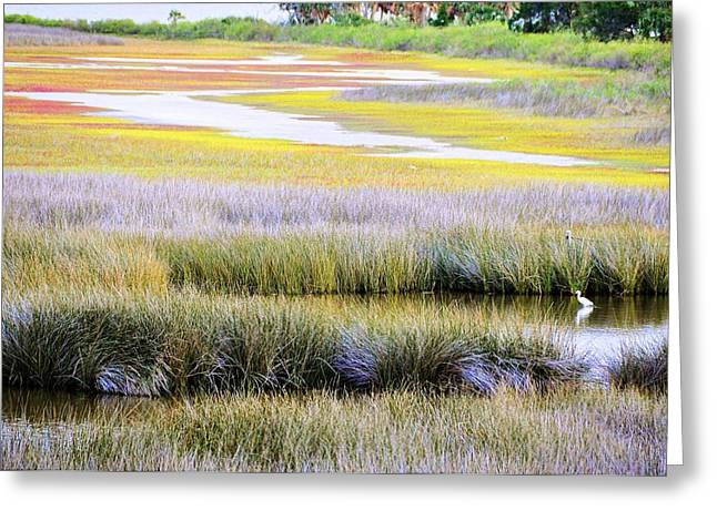 Wildlife Refuge. Greeting Cards - Sanctuary Greeting Card by Jan Amiss Photography