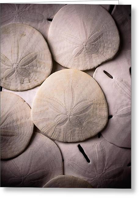 Snapper Greeting Cards - Sand Dollars  Greeting Card by Garry Gay