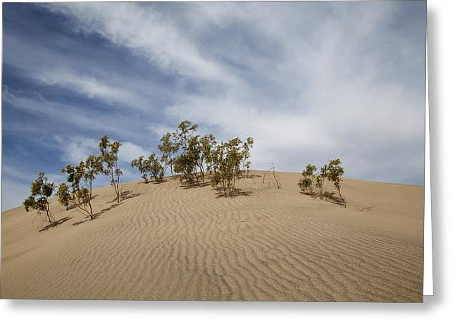 Lily Greeting Cards - Sand Dune and Trees Greeting Card by Lily