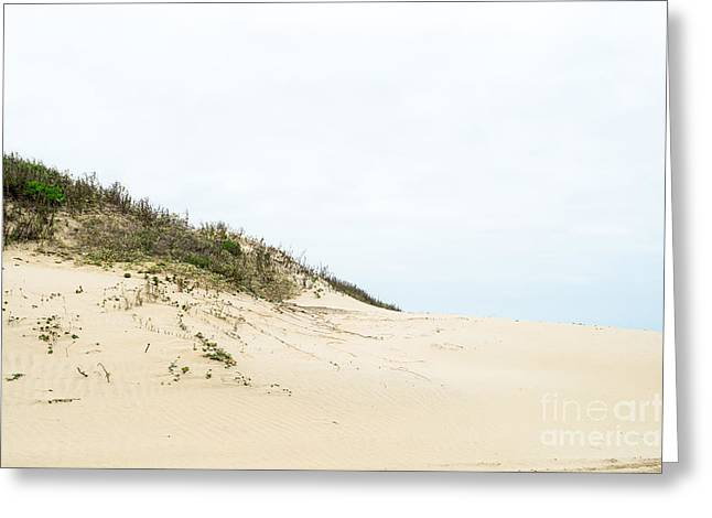 Sanddunes Greeting Cards - Sand dune at Gulf of Mexico closeup Greeting Card by IBC Stock Images
