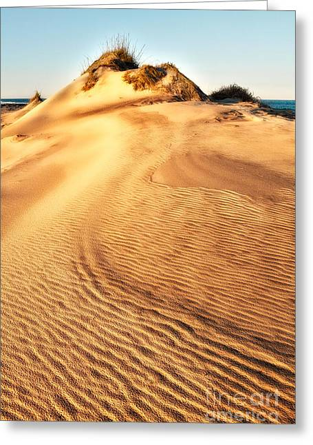 Pea Island Greeting Cards - Sand Dune Textures - Outer Banks I Greeting Card by Dan Carmichael