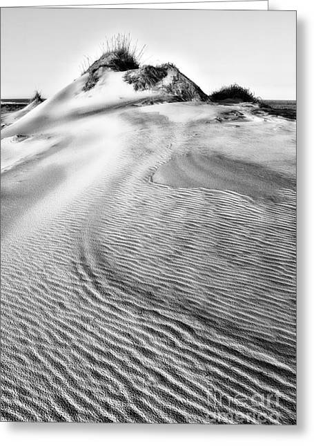 Pea Island Greeting Cards - Sand Dune Textures - Outer Banks II Greeting Card by Dan Carmichael